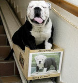 Stair Lifts for Dogs